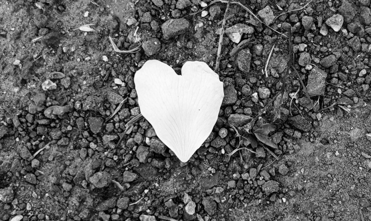 a heart-shaped leaf on a gravel path